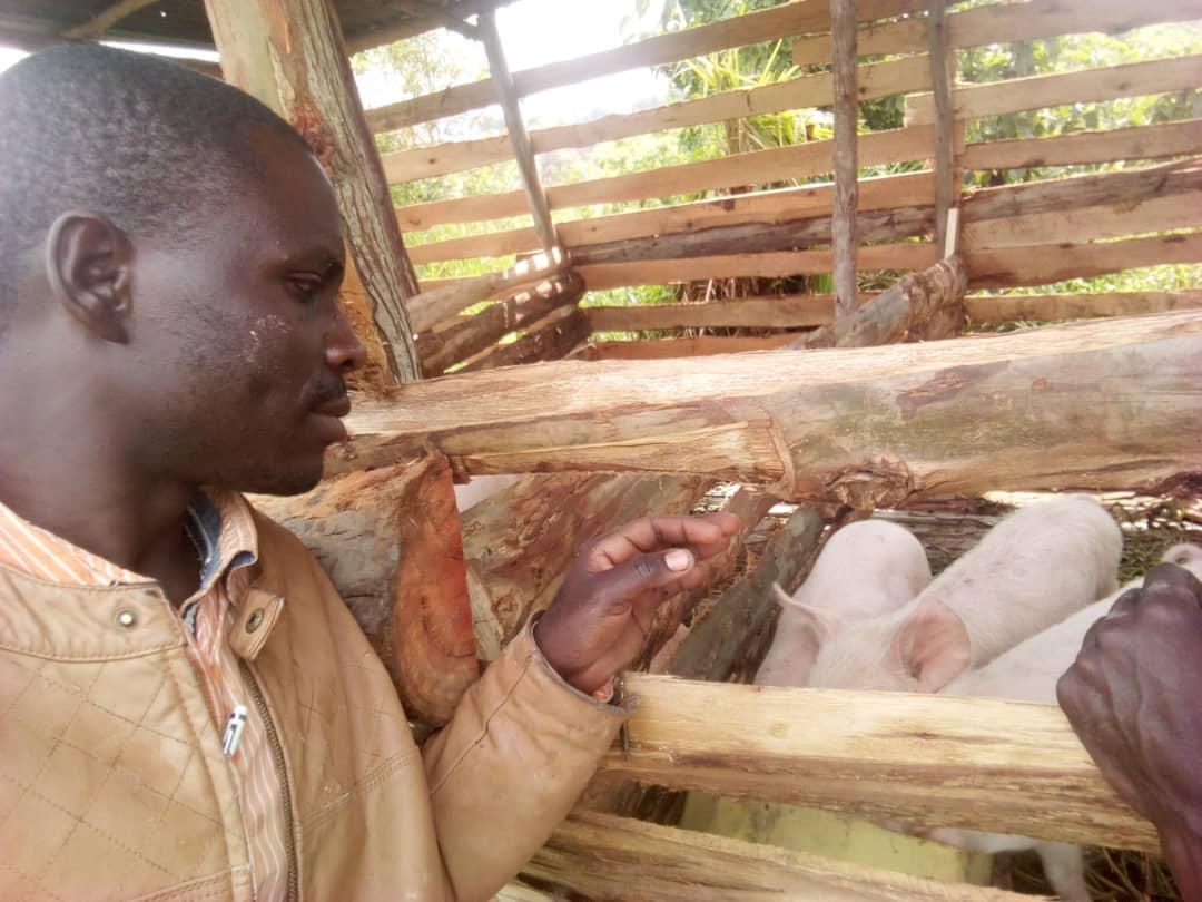 Piggery Project Oeganda